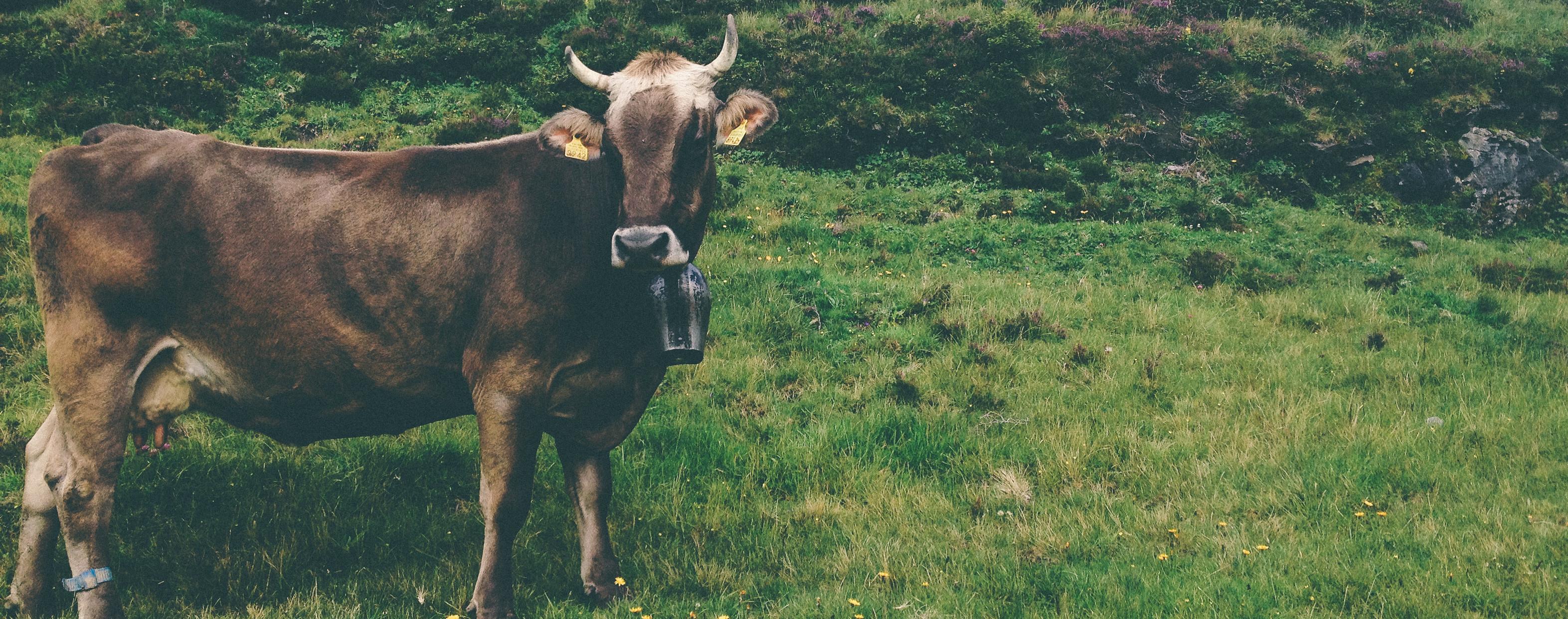 Zootecnia: la rassegna di agricoltura sempre più internazionale